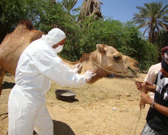 Coronavirus du syndrome respiratoire du Moyen Orient : arme NRBCe ?