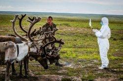 La maladie charbonneuse et la variole peuvent elles réapparaître avec le dégel du permafrost ?