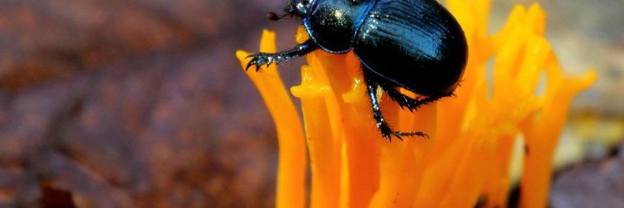 Les insectes : armes biologiques ?