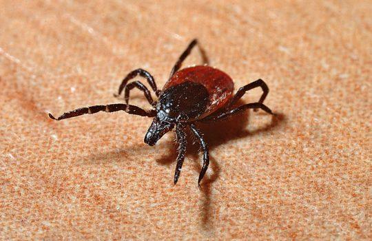 Lyme disease: CBRN biological weapon?